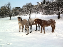Bientot place à la neige
