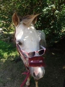Quand mon poney fais sa star..