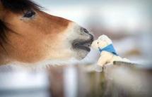 Bisous de cheval