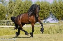 Un cheval au trot