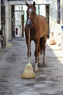Quand un cheval passe le balai