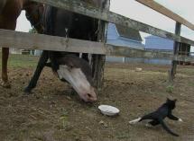 Un cheval a faim