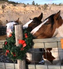 Le noel des chevaux