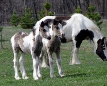 Calendrier de l'avent chevaux