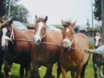 photo du concour départemental de chevaux de trait.