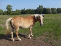 Voila mon cheval western