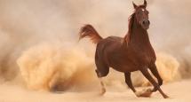 Un cheval en liberté au Maroc