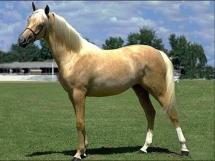 Et un nouveau cheval pour mon centre équestre