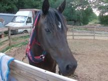 Prunella mon amour de cheval