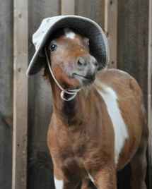 Protéger son cheval du soleil