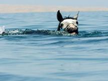 Une bonne baignade