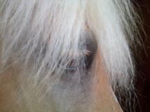 L'oeil de Maritza